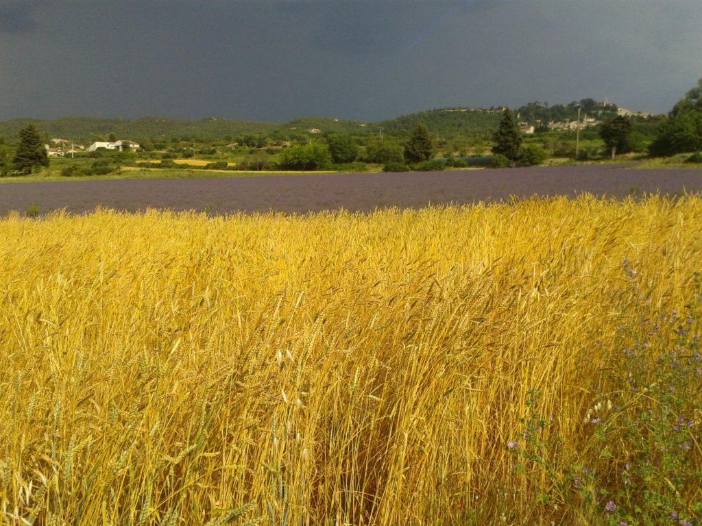 Le GAEC AUDE-MALBEC vend, à la ferme, ses miels et ses huiles essentielles de lavande et lavandin à Bonnieux en Luberon
