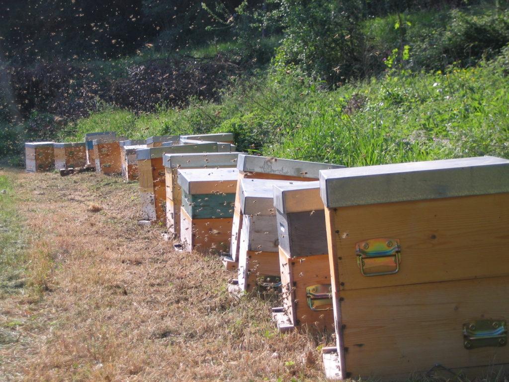 Vente à la ferme de miel et huile essentielle de lavande à Bonnieux